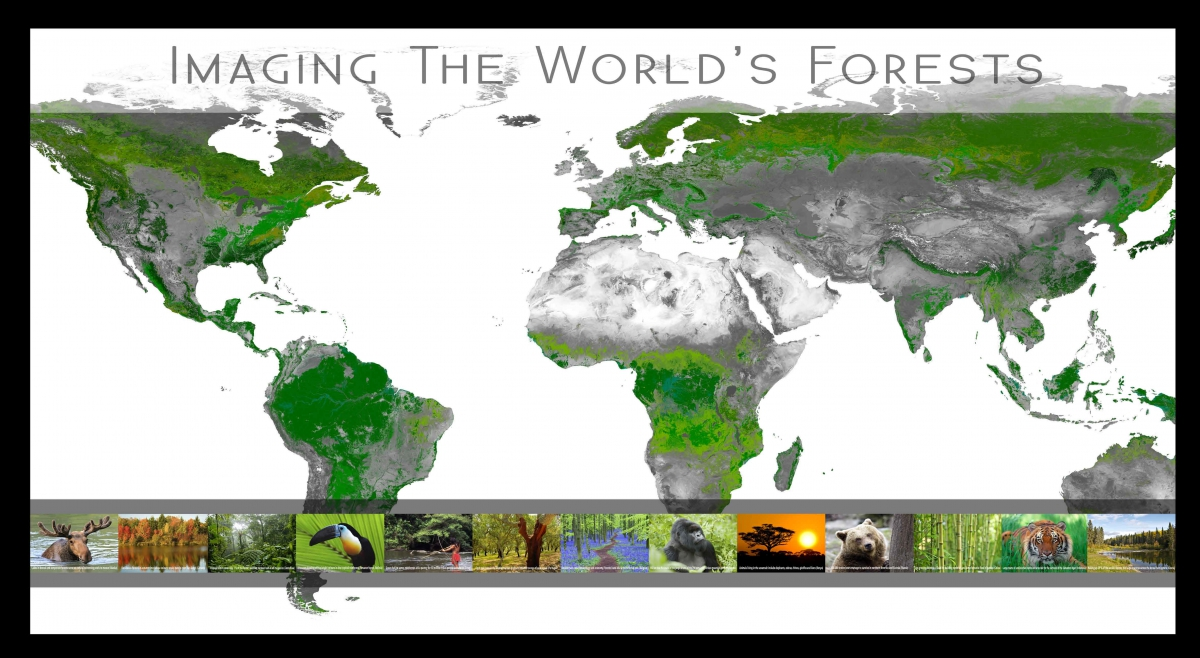 Map Of World Forests.Exhibition Imaging The World S Forests Belgian Platform On Earth